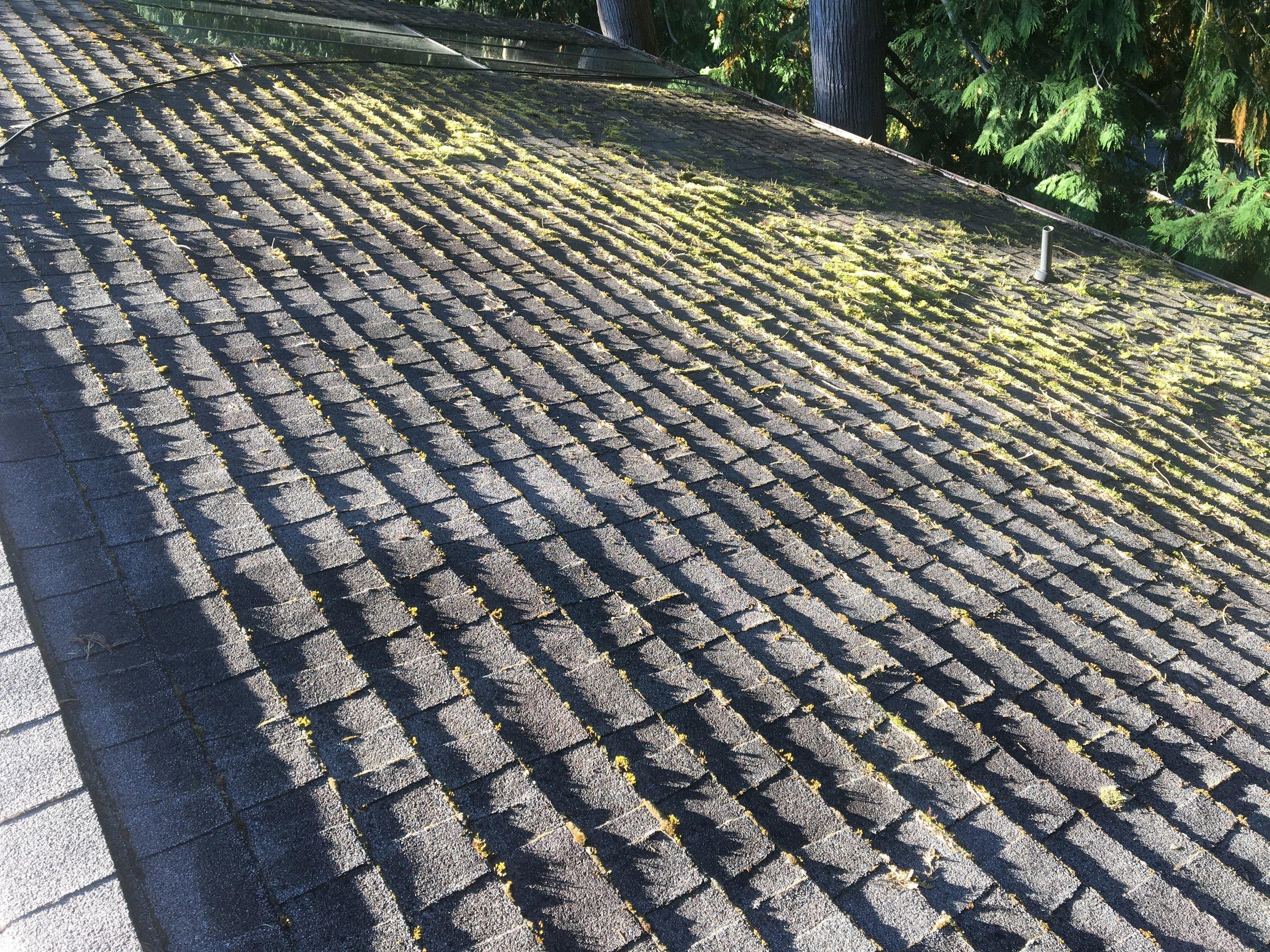 roof_4_before.JPG
