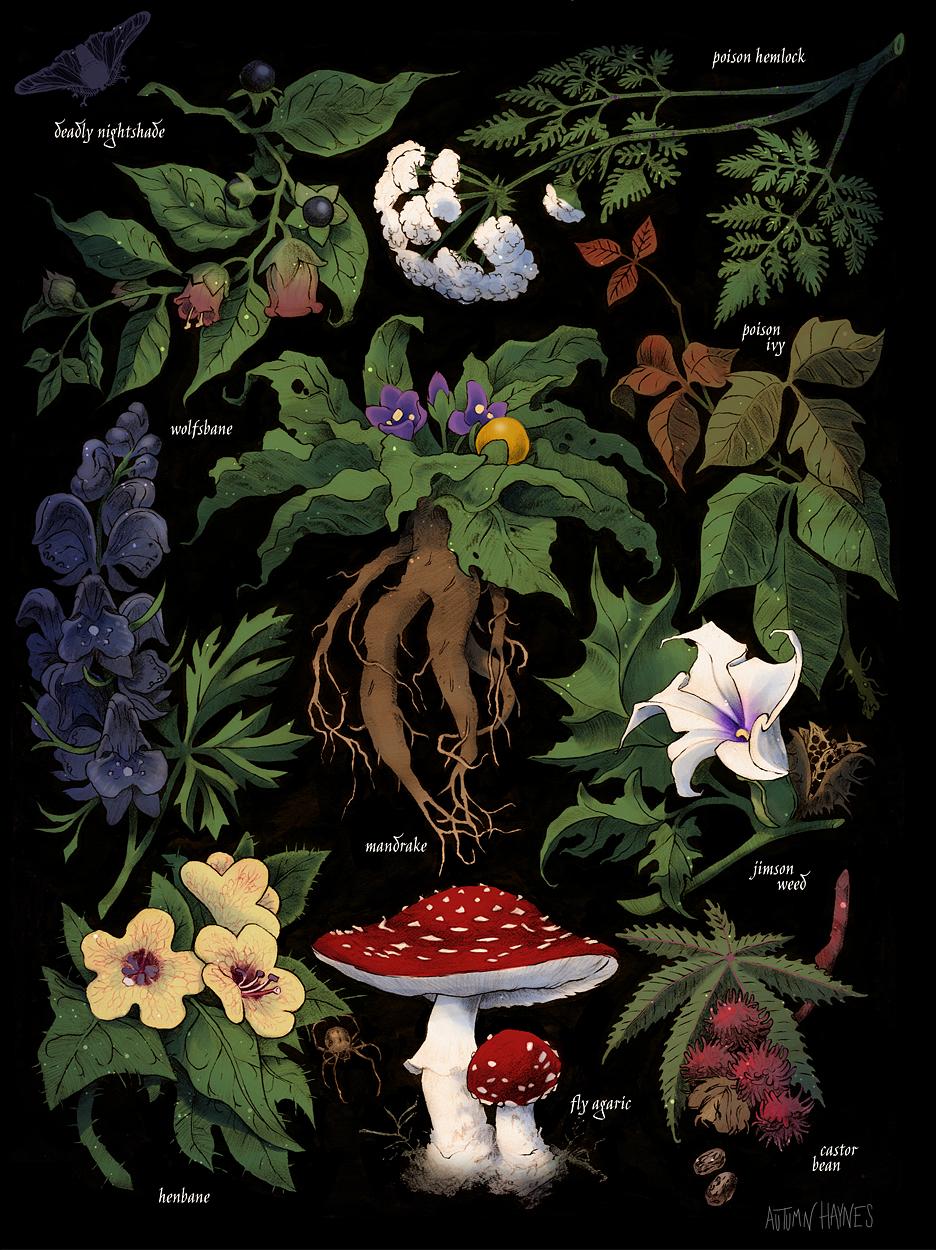WEBSITE_poison_plants.jpg