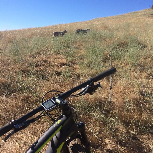 Shoutout to the encouraging sheeps  #noshortcuts @scottsports @bikeonscott @srammtb @jakroousa @stansnotubes @dumondetech @schwalbetires @esigrips @genuineinnovations