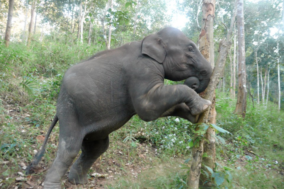 DeeDee_ElephantBaby.jpg