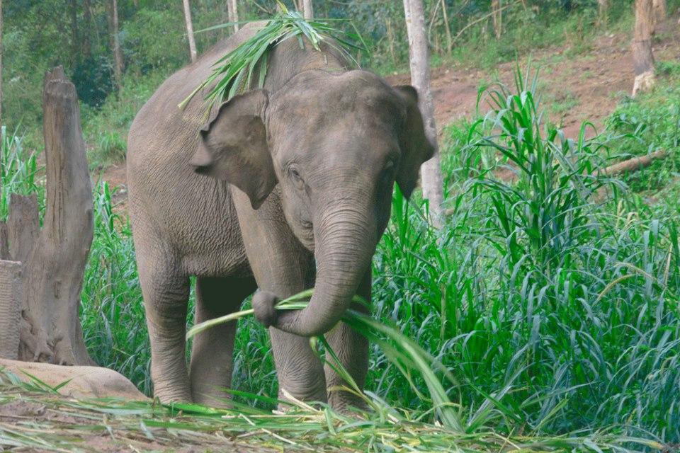 RimMuey_Elephant.jpg