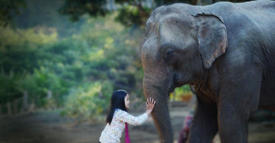SeaVoy_Elephant.jpg