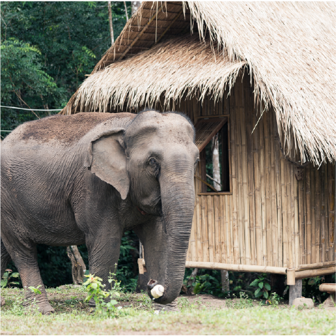ELEPHANT RESCUE AND MOUNTAIN HOMESTAY