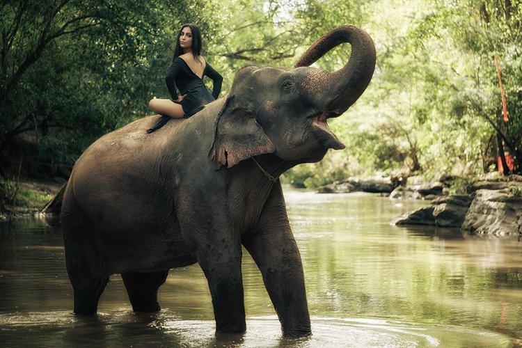 Elephant jungle photoshoot