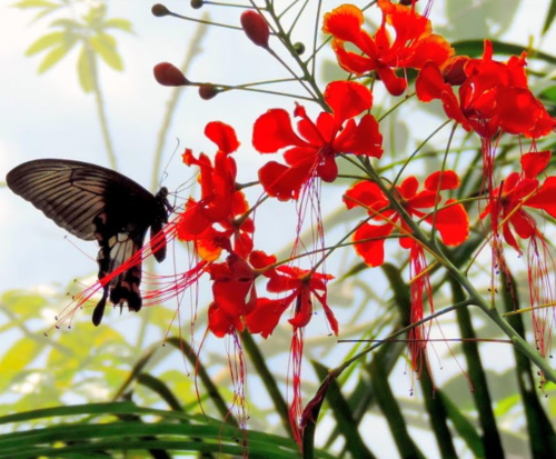 Butterfly Garden in Chiang Mai