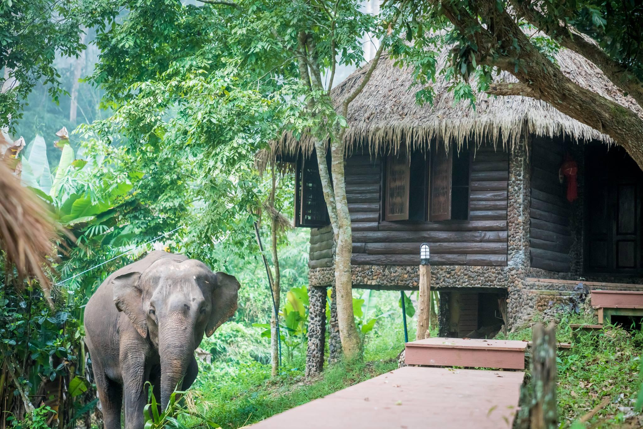 bungalow-elephants.jpg
