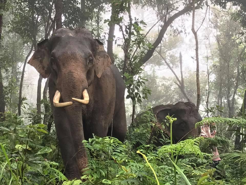 Elephant-rescue.jpeg