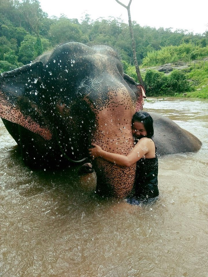 """Chai Lai Sisters Guide """"Nut"""" aka Lady Gaga gives her elefriend a hug."""
