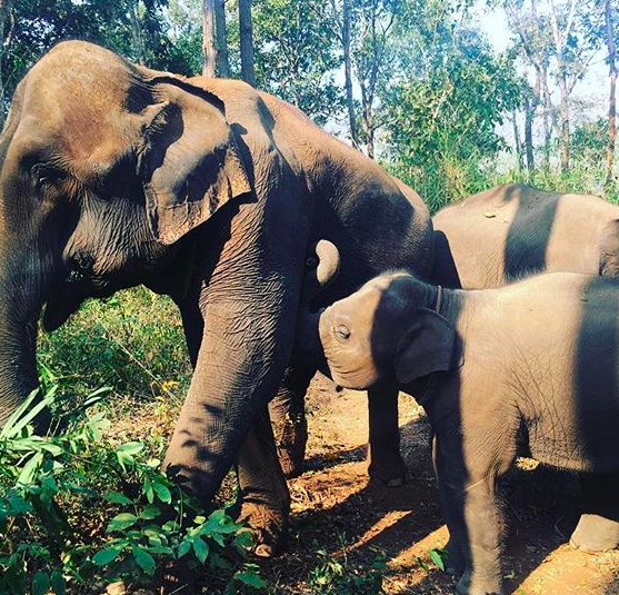 Baby elephant kwan jai
