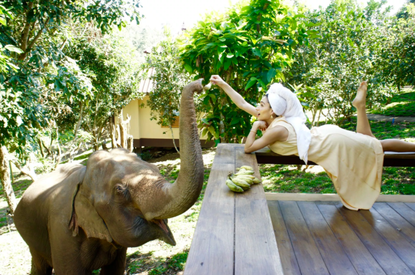 live at an Elephant sanctuary in Chiang Mai