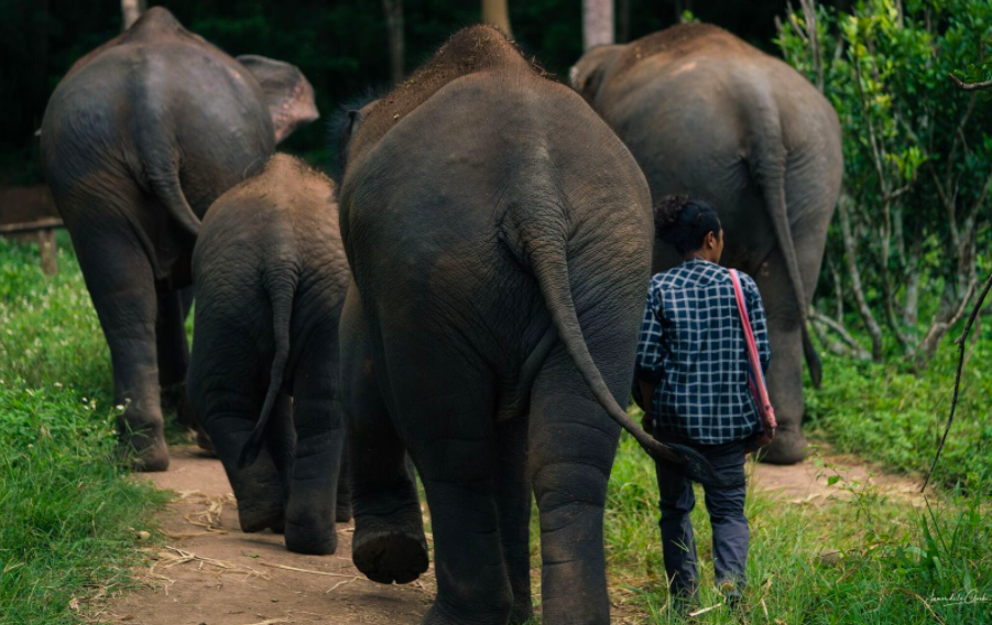 A happy elephant family walking to their jungle sanctuary