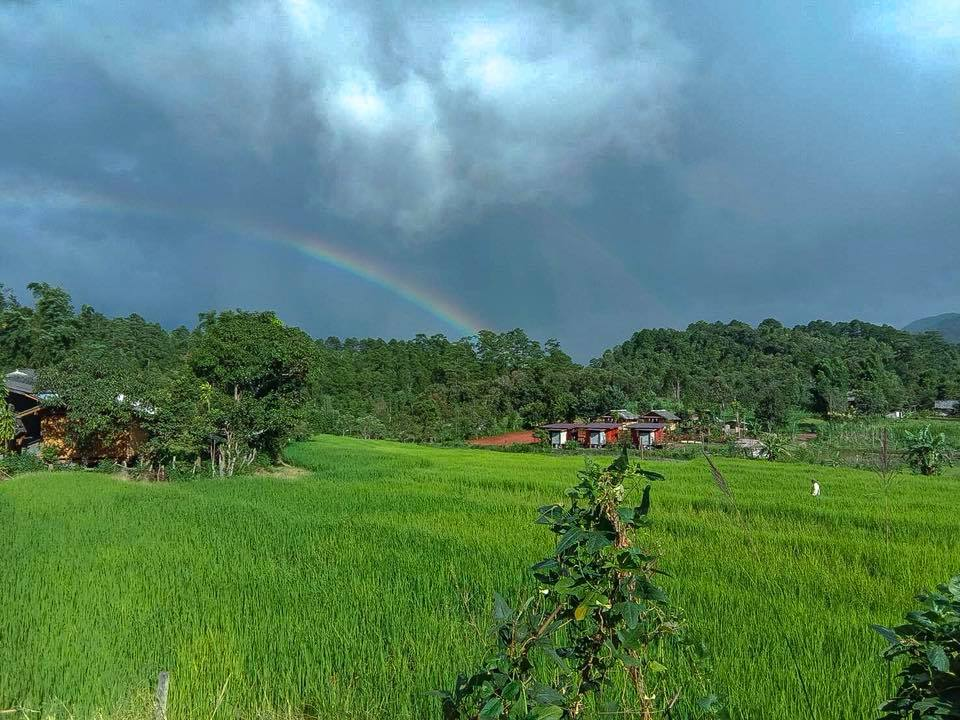 Rice fields and rainbows