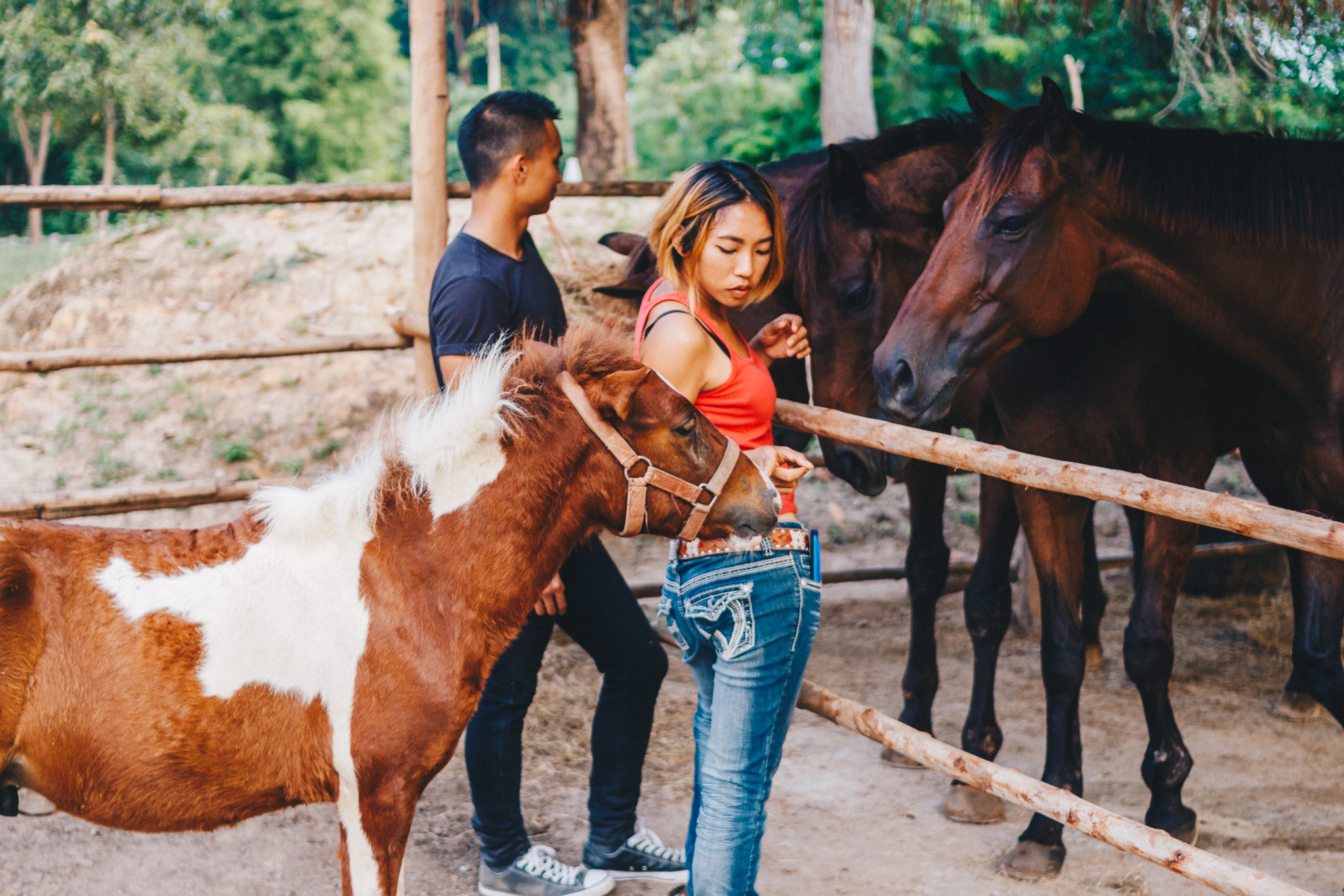 Second-Wind-Horse-Rescue-Ranch-ChaingMai-Suniko-Photo-October-2018-68.jpg