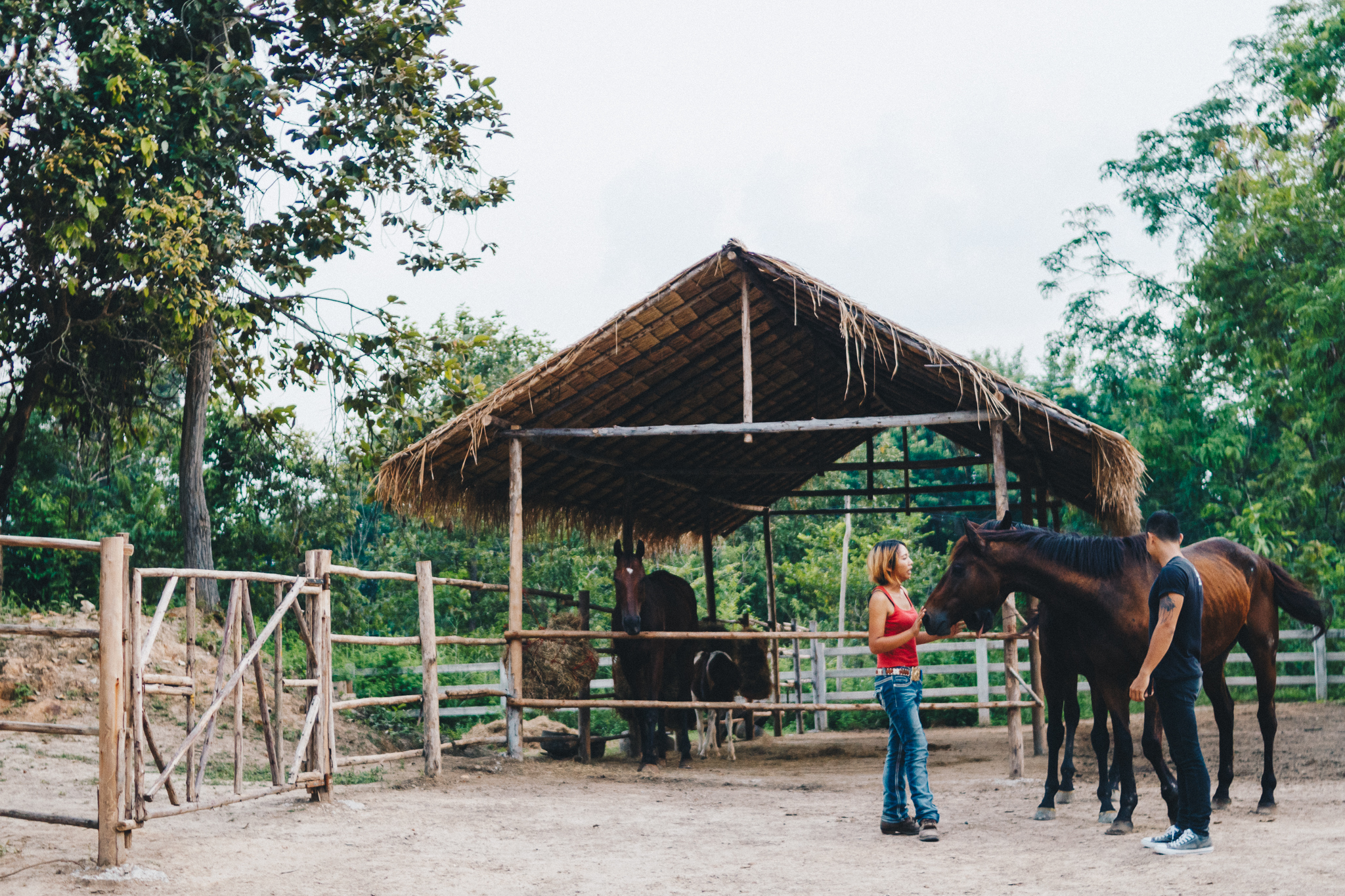 Second-Wind-Horse-Rescue-Ranch-ChaingMai-Suniko-Photo-October-2018-80.jpg