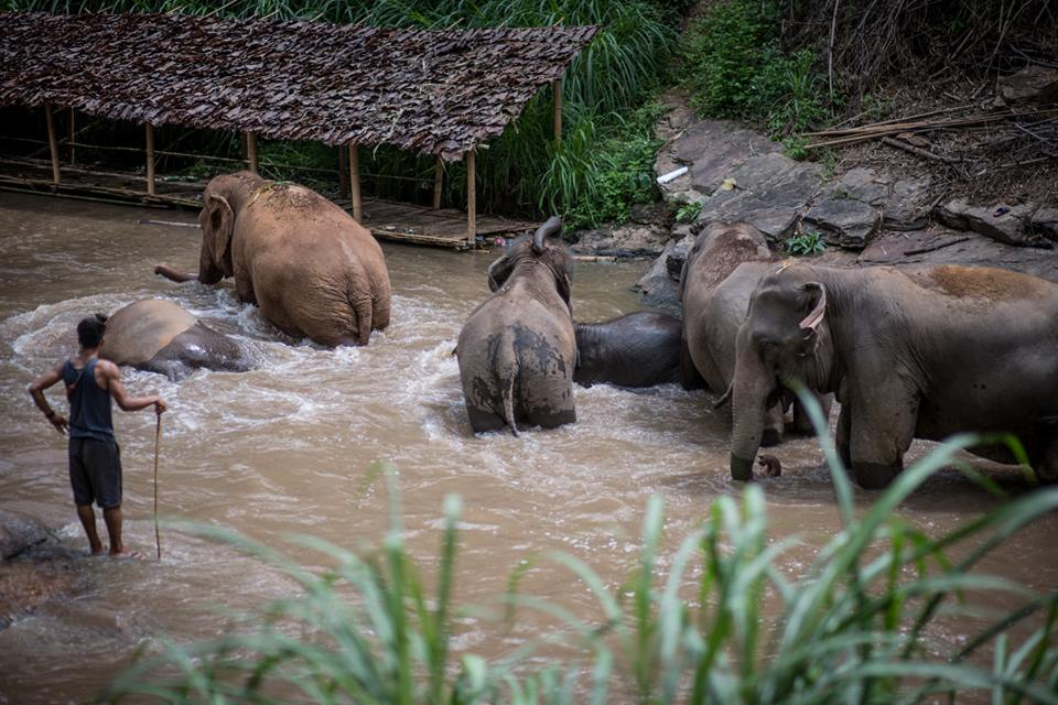 What is life like for elephant caretakers?