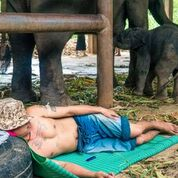 A Mahout sleeping with is elephants
