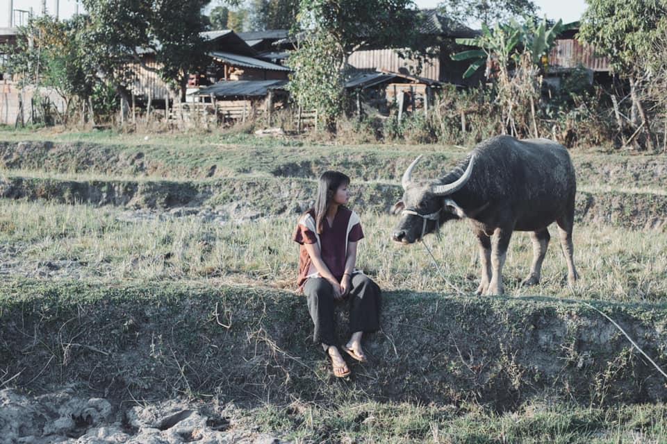 Soe and a lazy buffalo