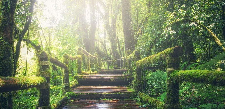 Ang-Ka-Nature-Trail-Doi-Inthanon-1.jpg