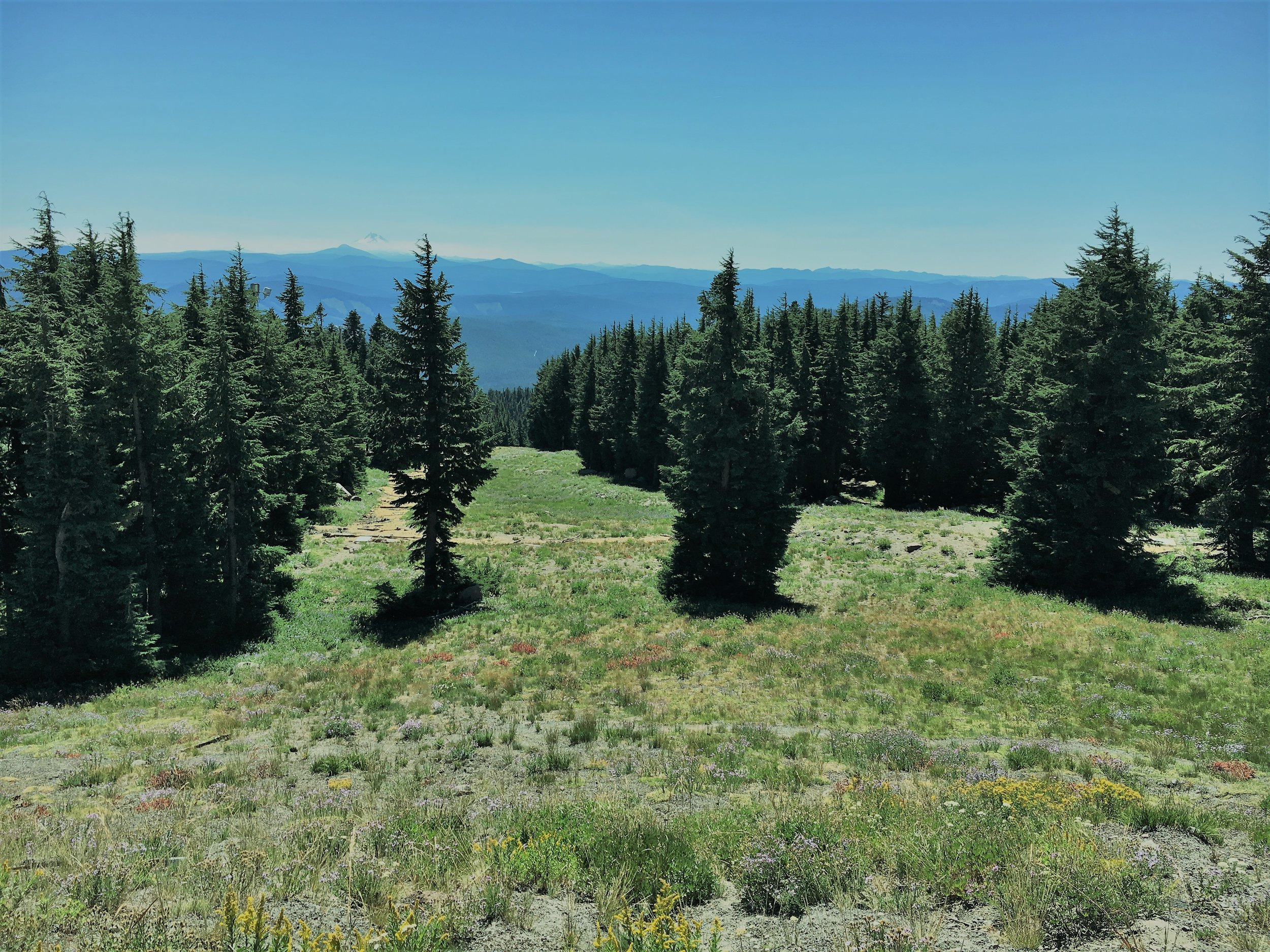 The View from Timberline Lodge Entrance