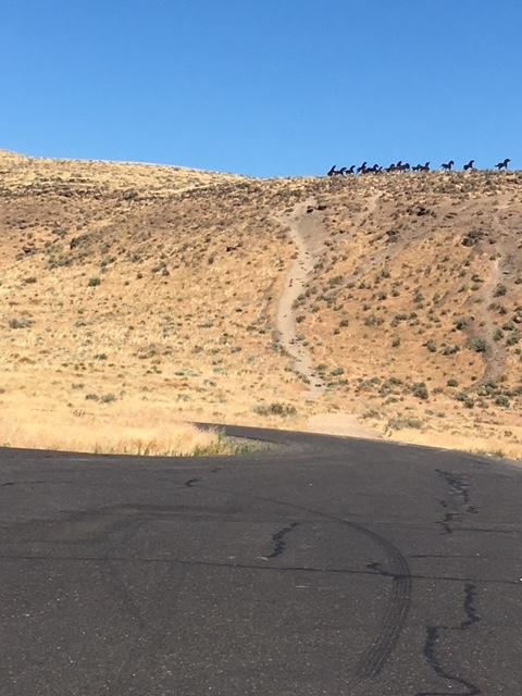 Wild Horse Monument Steep Hike