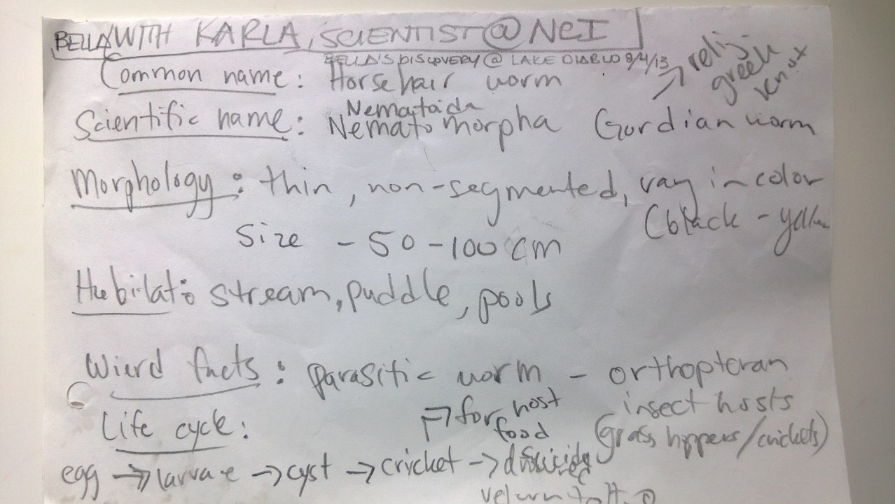 Field Notes from Impromptu Parasitic Worm Research with Institute Biologist Guide and our 7 year-Old Daughter Bella