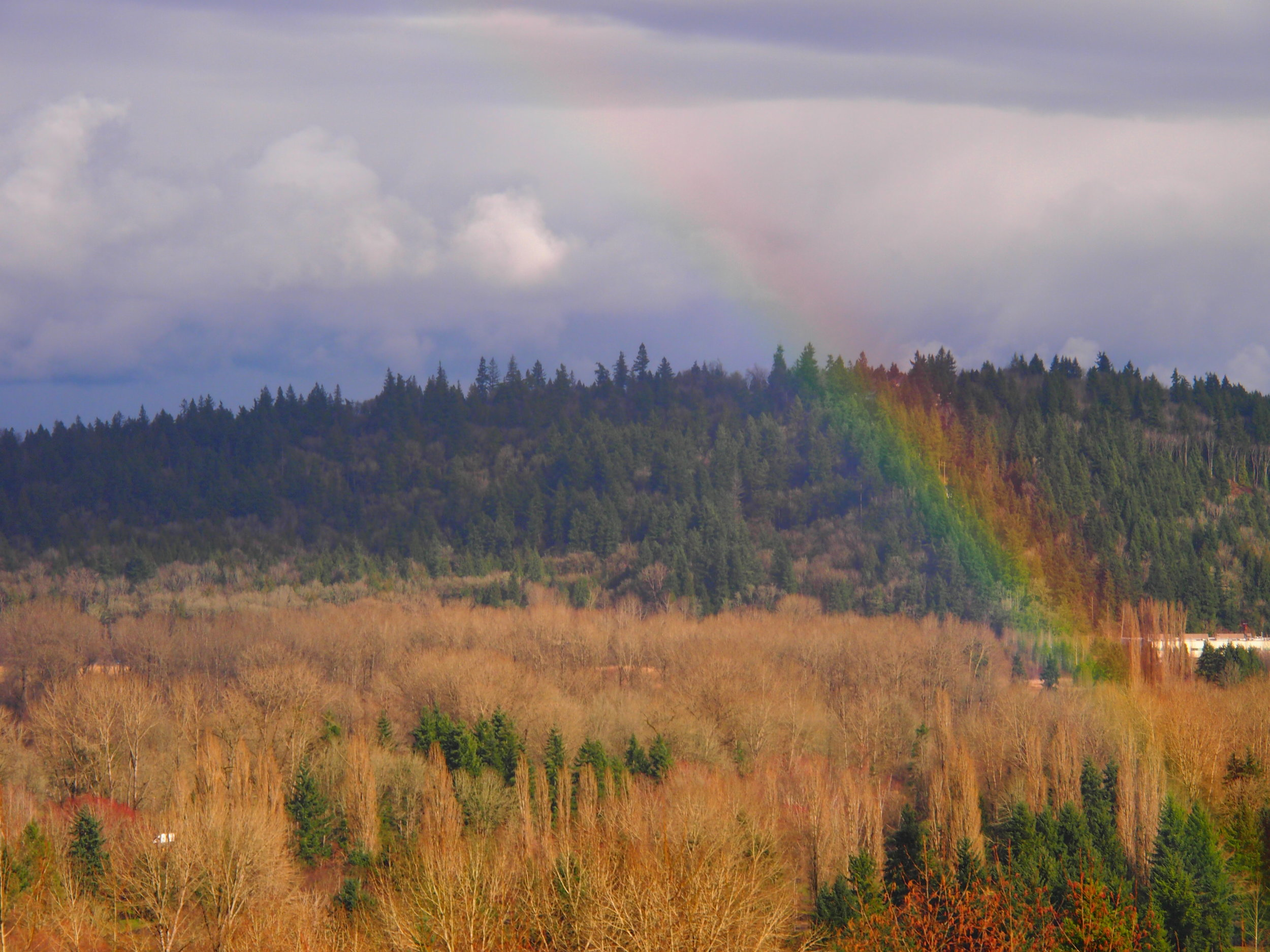 Rainbows can often be spotted during Seattle sunbreaks