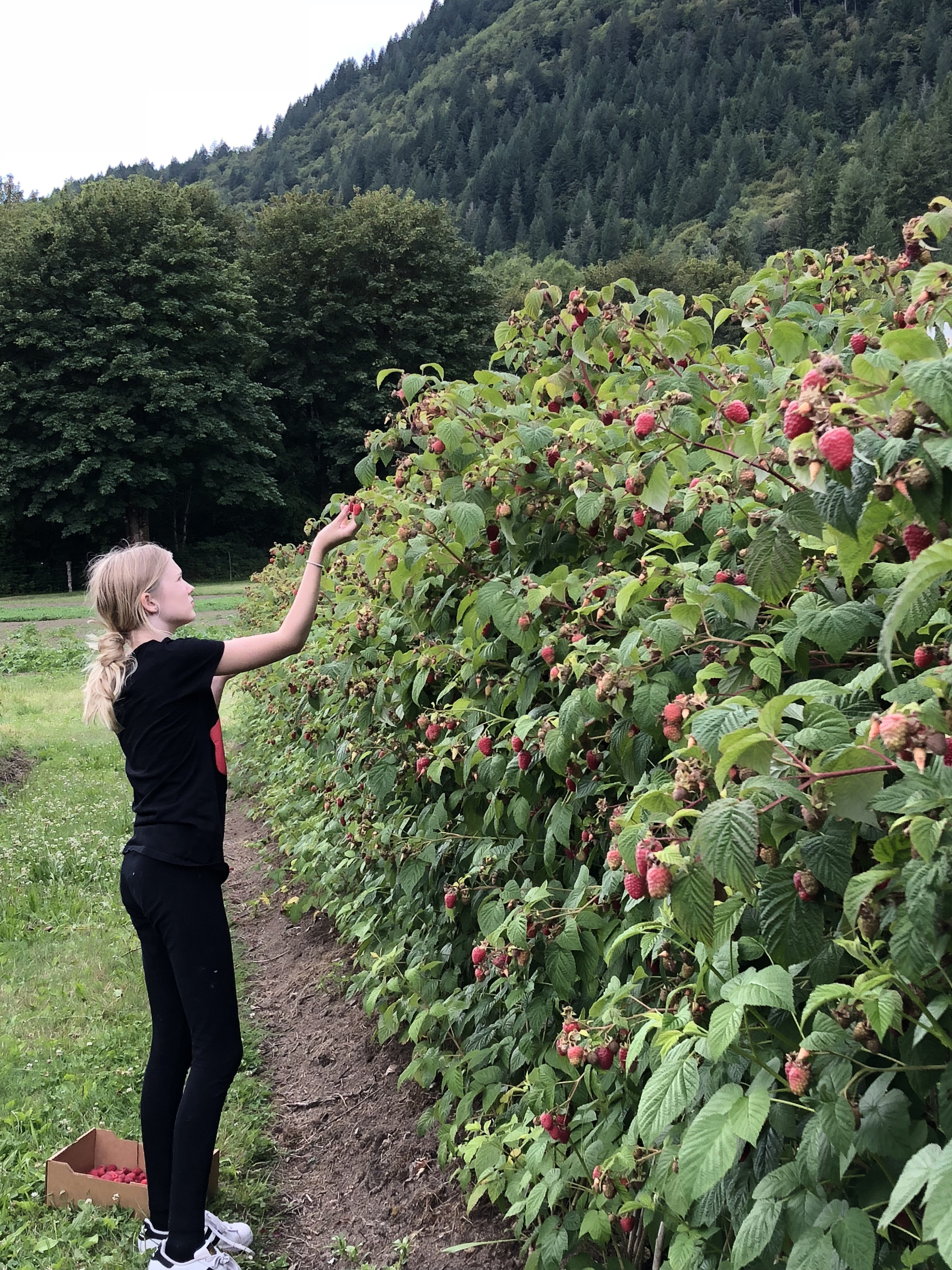 Pick Berries at Cascadian Farms