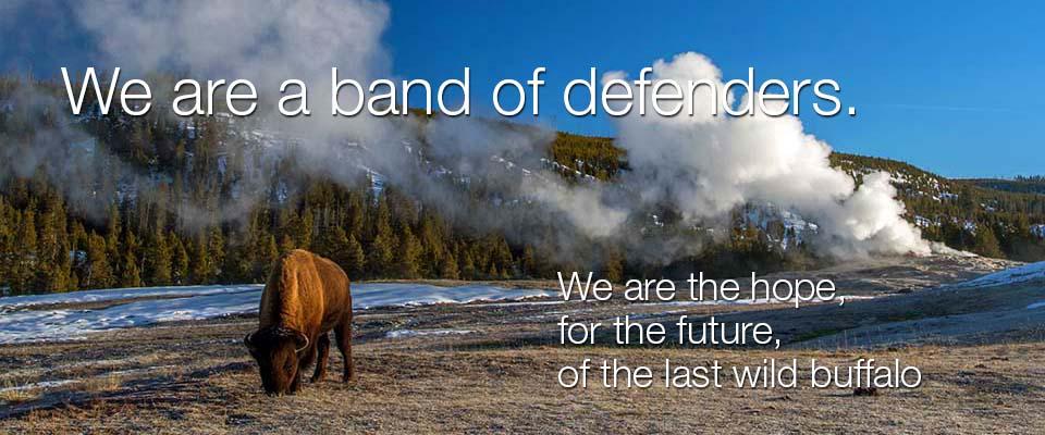 http://www.buffalofieldcampaign.org -