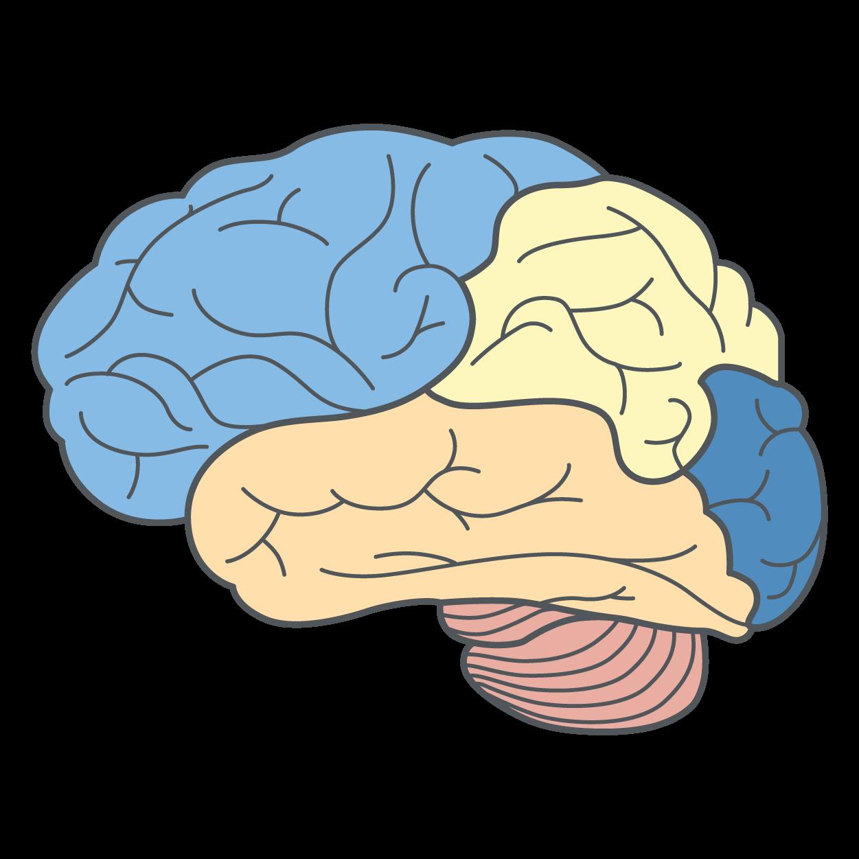 Brain_2-02.png
