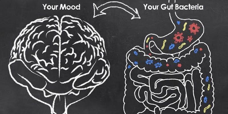 CNM Bristol - The Gut-Brain Connection