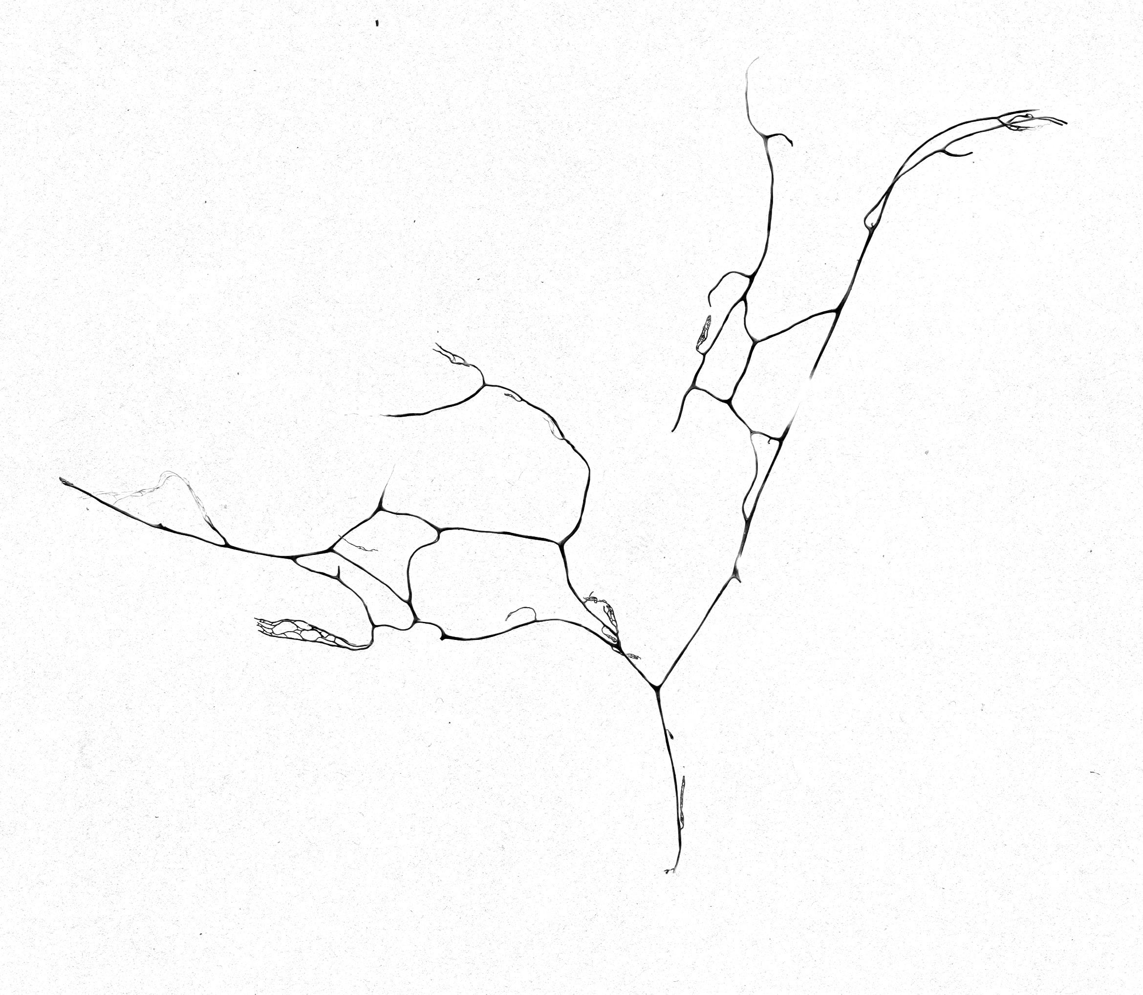 Lichen No. 1, Desktop scanner