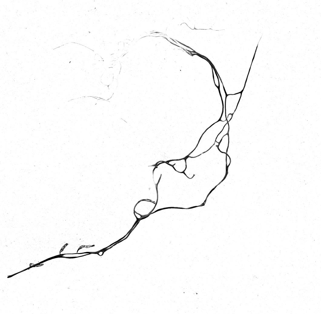 Lichen No. 2, Desktop scanner