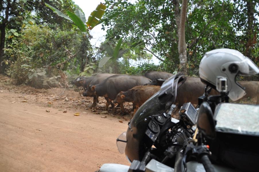 Thailand10Feb019.jpg