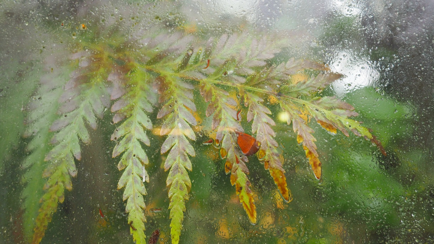 fern through glass.jpg