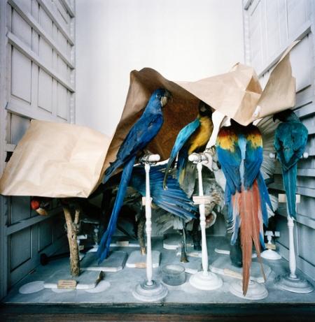 Richard Ross, Museum National D'Histoire Naturelle, Paris, France 1982 1
