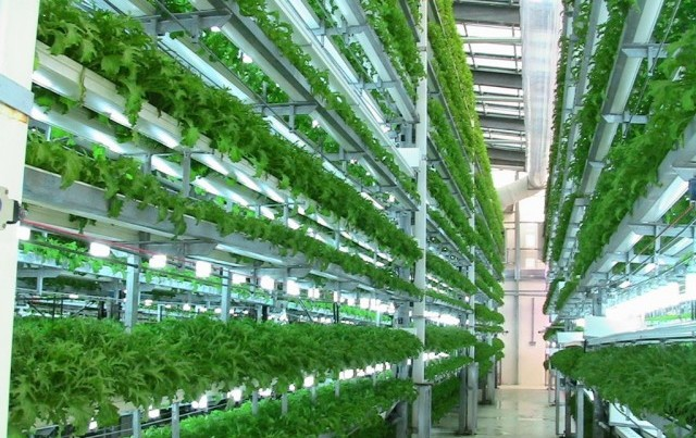 Almost startling in their perfection: AeroFarm's leafy greens grow in micro-managed trays stacked 30 feet high.