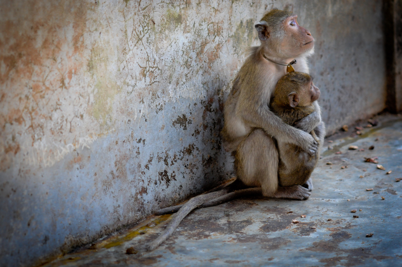 Macaque breeding facility, Laos. Picture: Jo-Anne McArthur, We Animals.