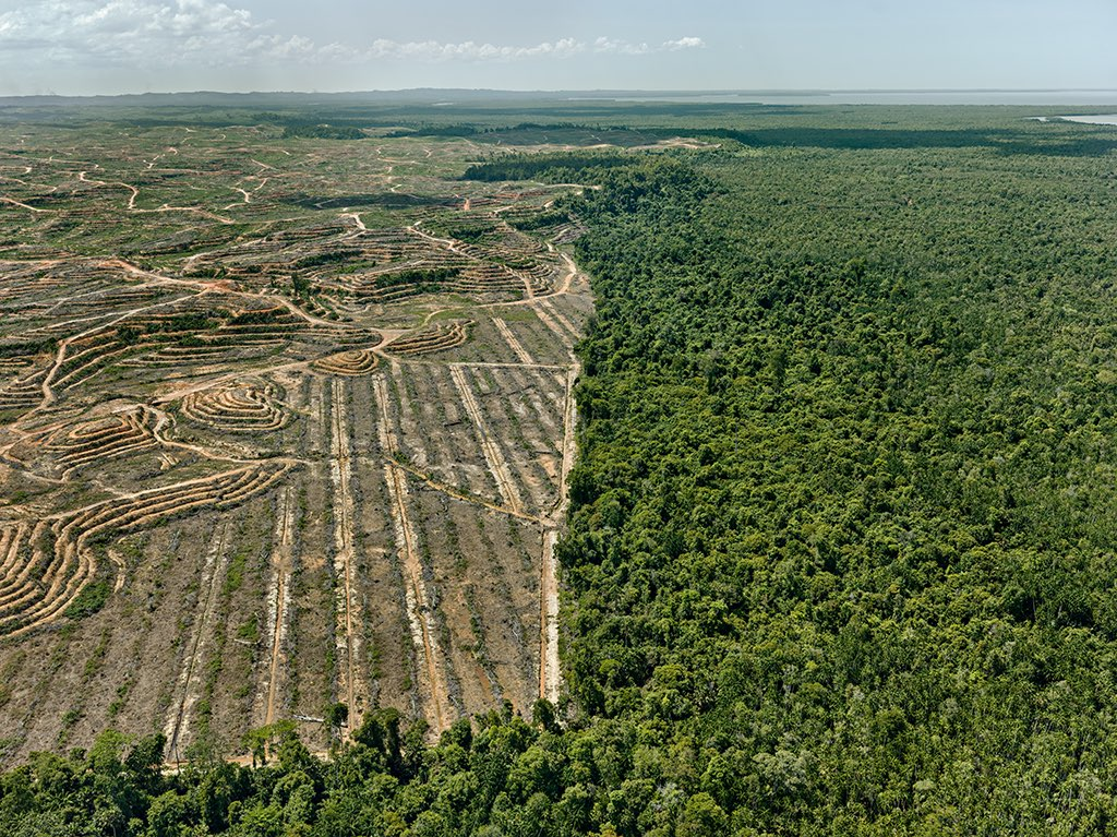 Clear cut #1. Palm Oil Plantation, Borneo, Malaysia. 2016 . Image: Edward Burtynsky, The Anthropocene Project .