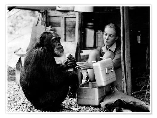 "Jane Goodall remembers David Greybeard: ""The one who lost his fear."