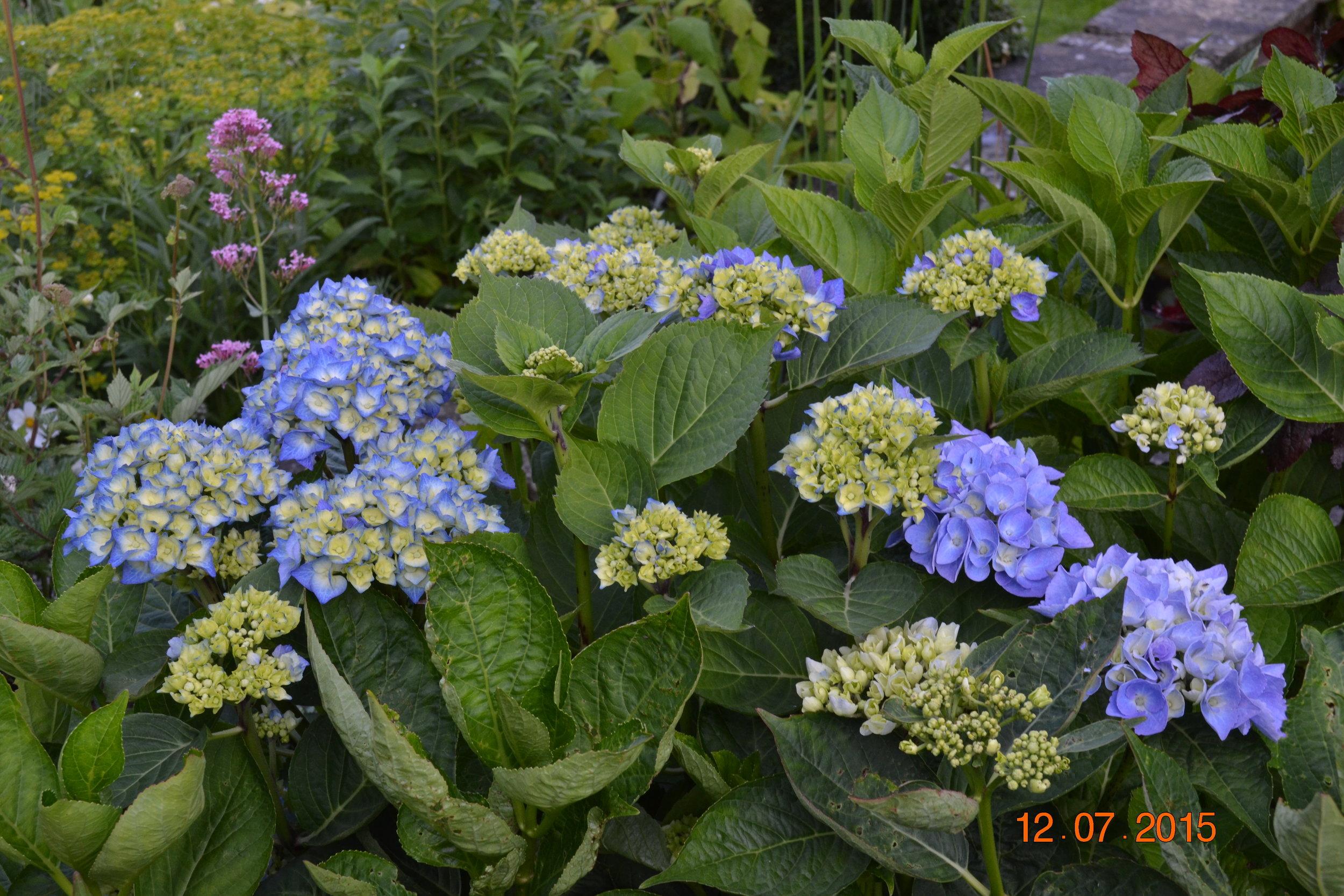 Wales 2015 garden summer flower arranging at home 032.JPG