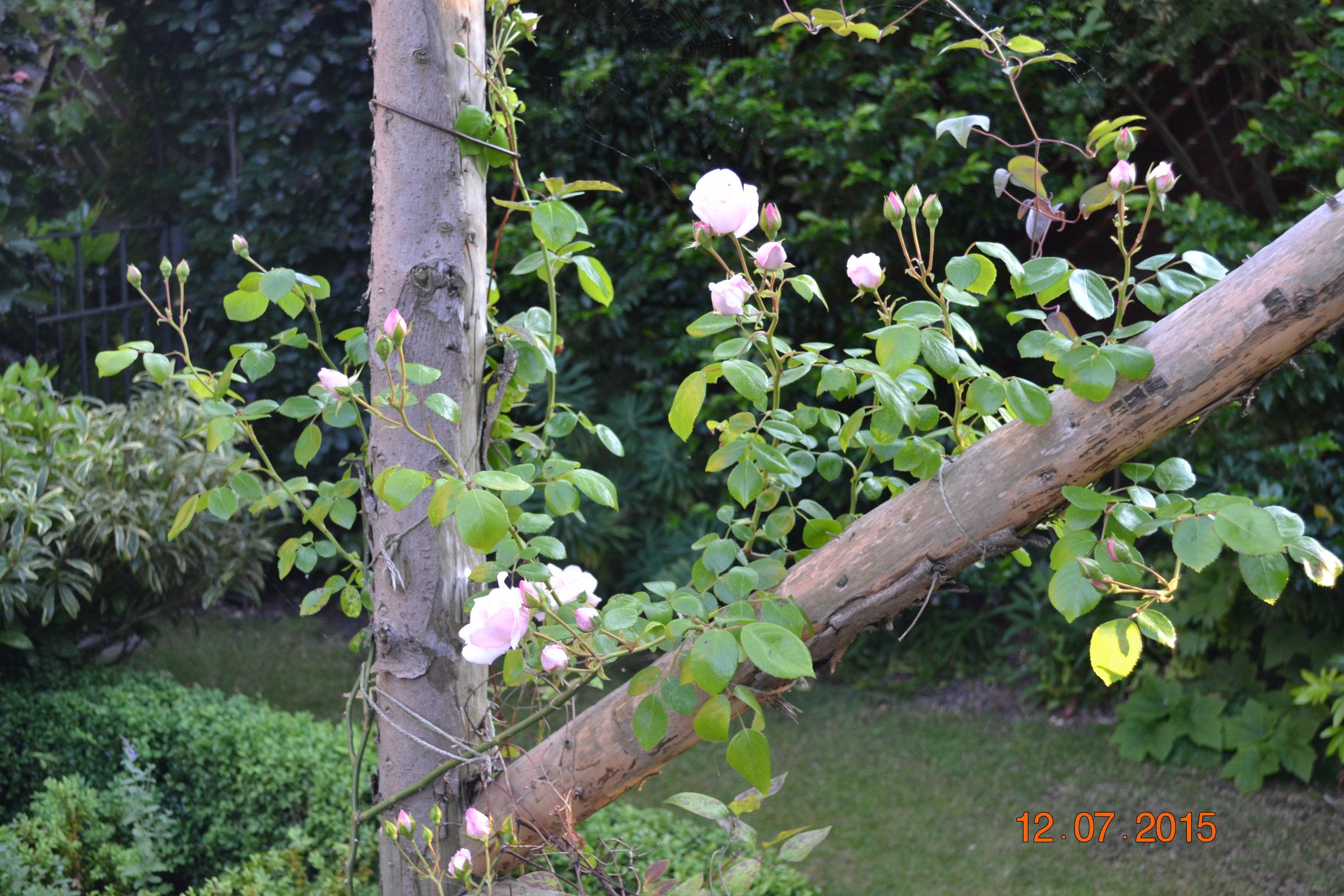 Wales 2015 garden summer flower arranging at home 042.JPG