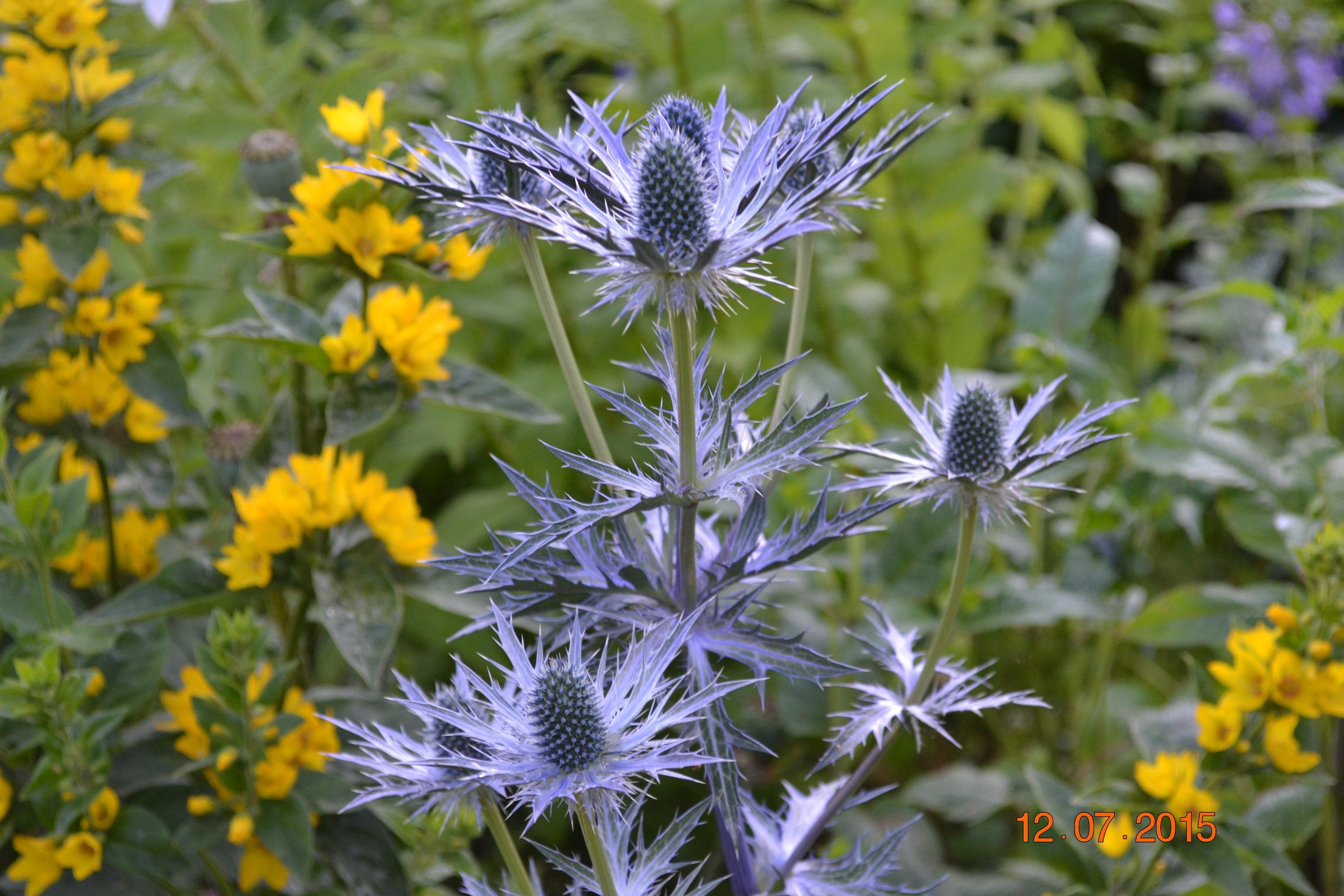 Wales 2015 garden summer flower arranging at home 071.JPG