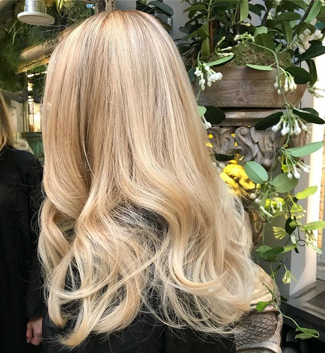 S M U D G E & F U L L O M B R E ❤️ one of my favourite colours that I do. Creating a root smudge to lift my lady's base up a shade and doing a combination of baby lights and balayage. Blowdry also by me. 💁🏼♀️ • • • #fdhair #blondehair #blondebalayage #blondehighlights #babylights #hairgoals #hairideas #hairinspiration #chelsea #fulham #londonhair #colourdirector #lct18 #smudge #ombre #autumnhair #lovemyjob #bigbouncyblowdry #blend