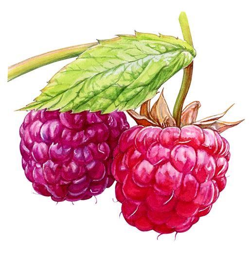 wc-ppraspberries.jpg