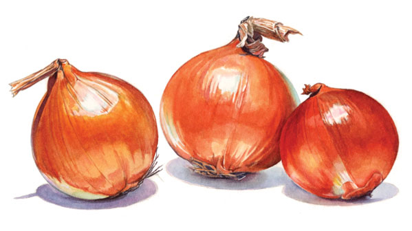 Illustration for Franklin Foods' French Onion Dip label