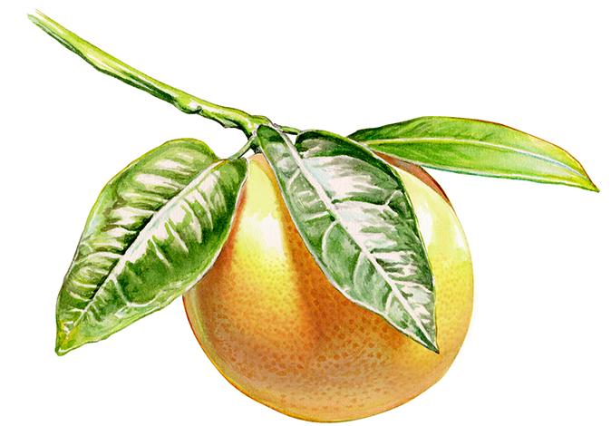 wc-BWgrapefruit!.jpg