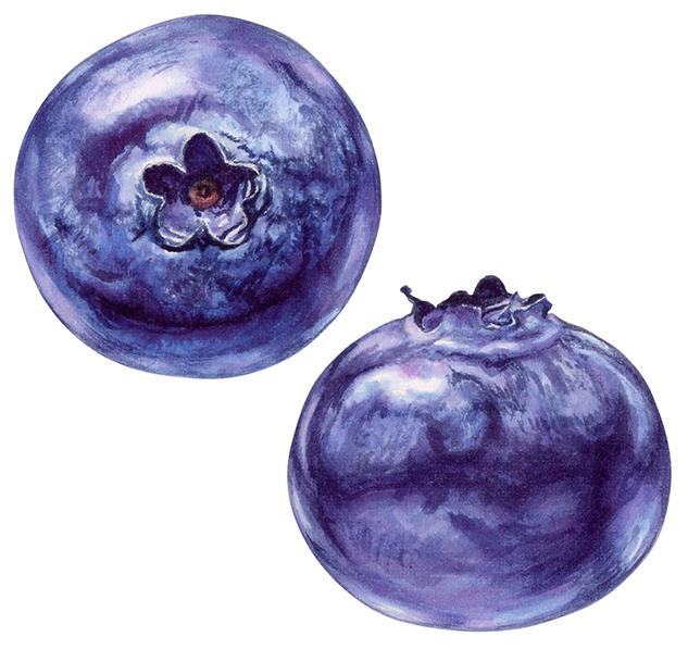 Blueberries for yogurt packaging