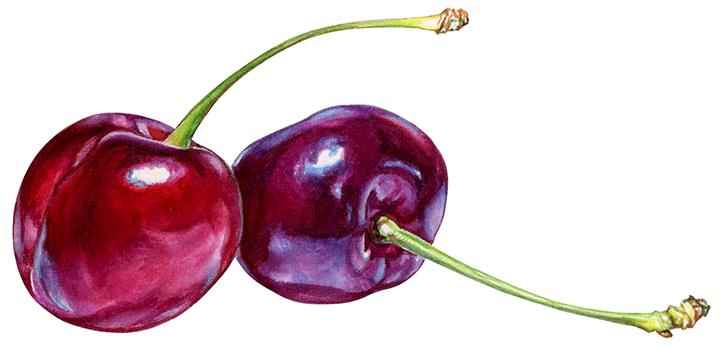 Cherries for yogurt packaging