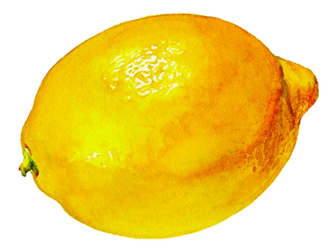 WC-AL lemon whole.jpg