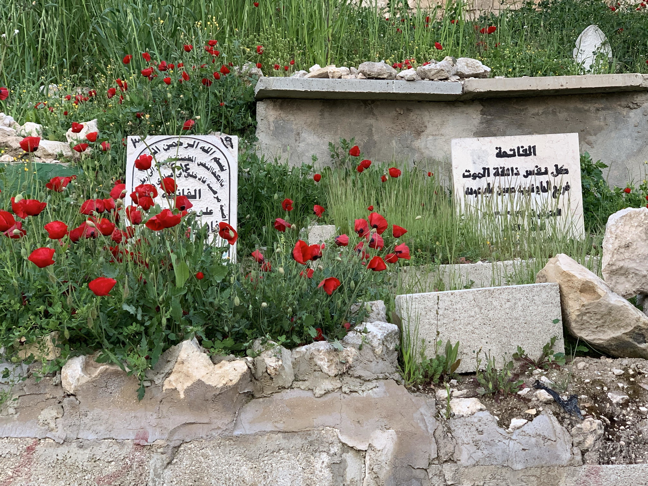Poppies at Bab al-Rahma Cemetery. Photo by Sara Weissman.